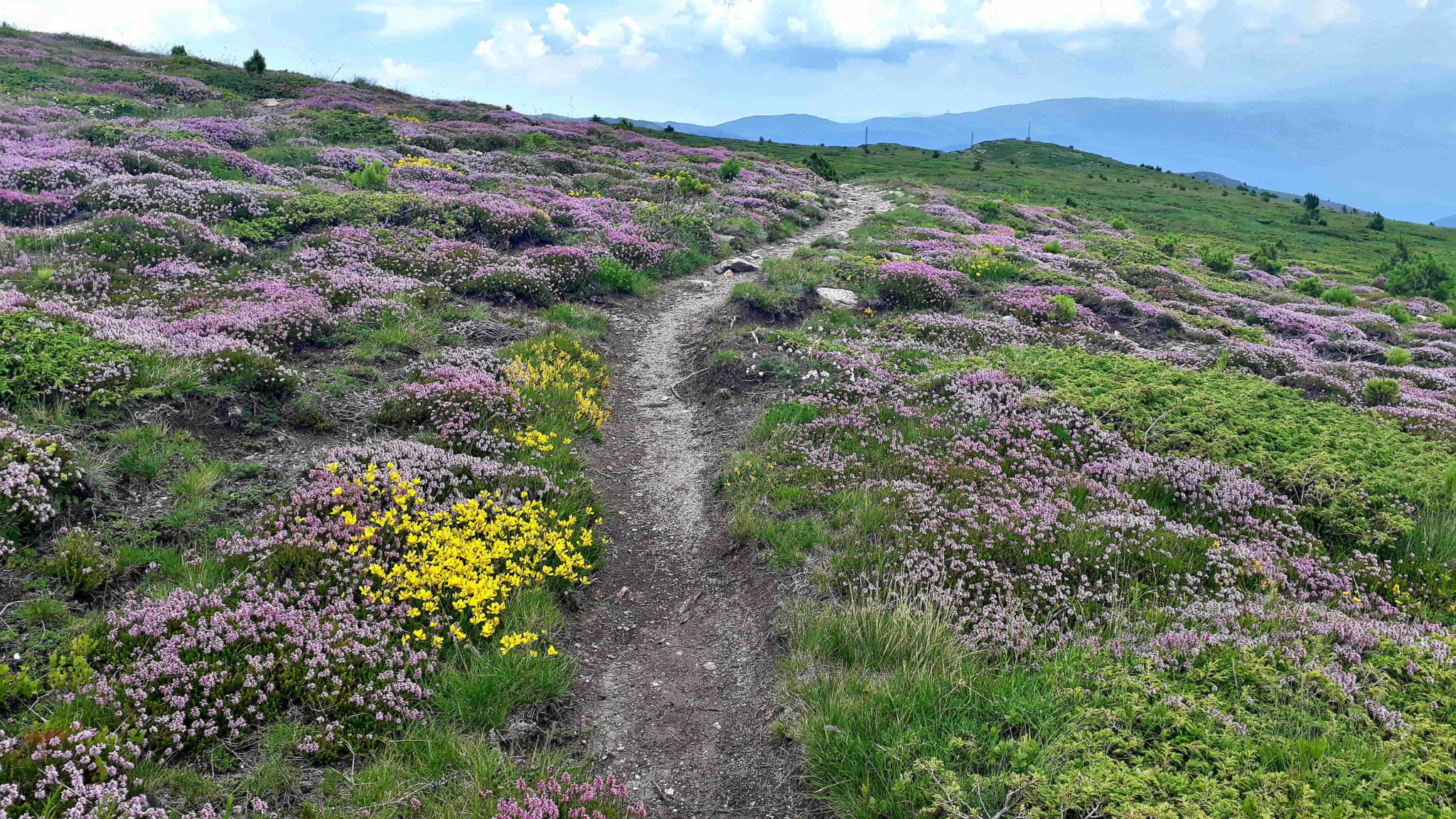 High-mountain path in Central Balkan