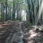 Balkan forest